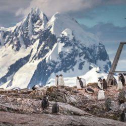 A-flock-of-penguins-Antarctic-Mountains.jpg