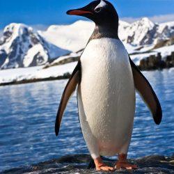 See-the-beautiful-penguins-in-Antarctica.jpg