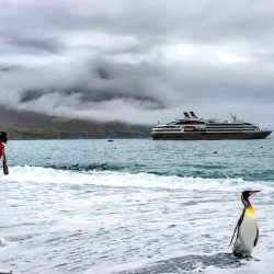 Take-photo-of-your-favorite-animal-on-a-cruise.jpg